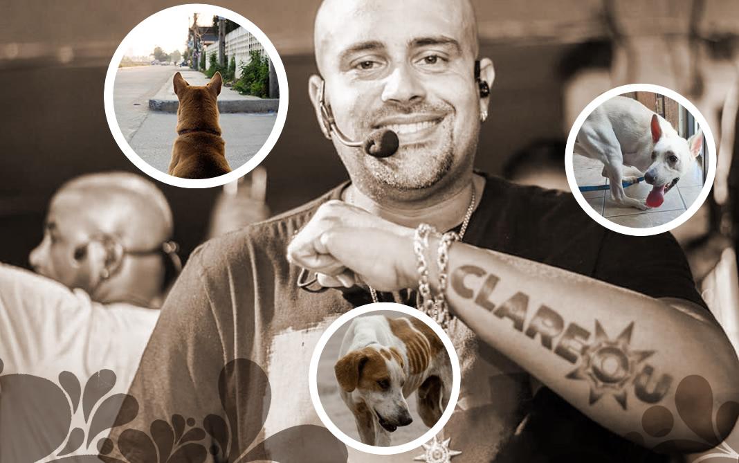 Live solidária para pets